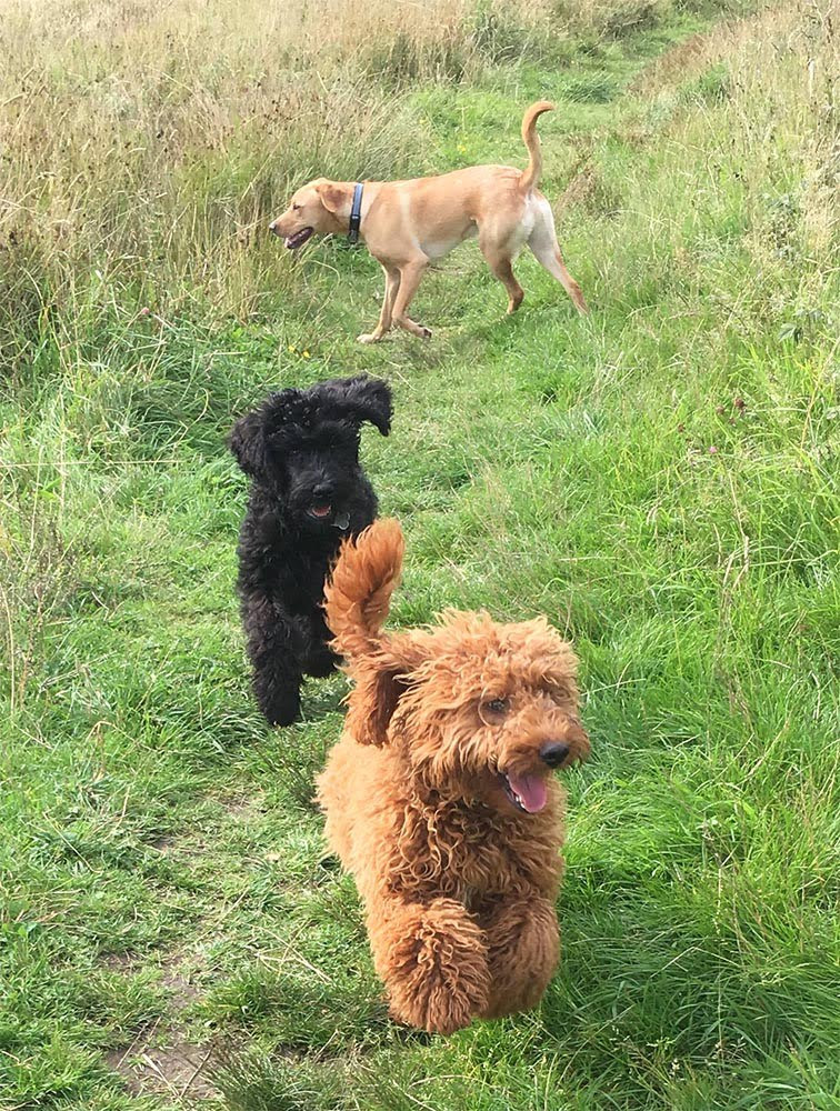 mums and dads dog walking glasgow