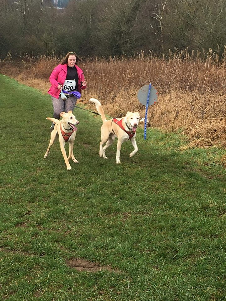 canifit time trials stardust doggy care dogs running in field on lead