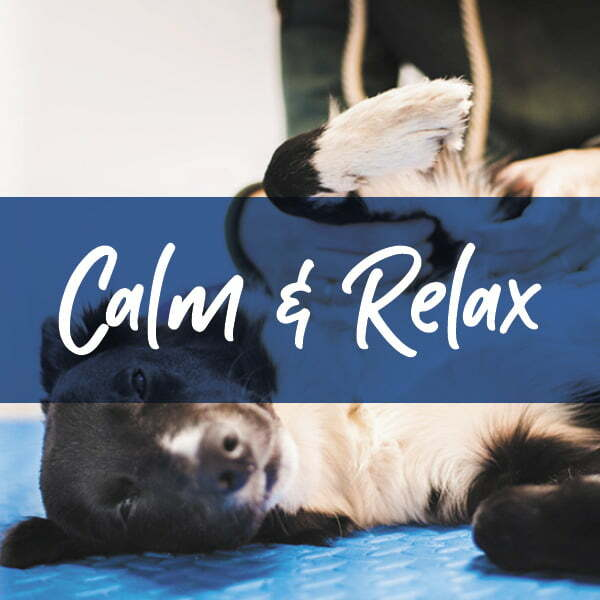 stardust dogs calm and relax workshop
